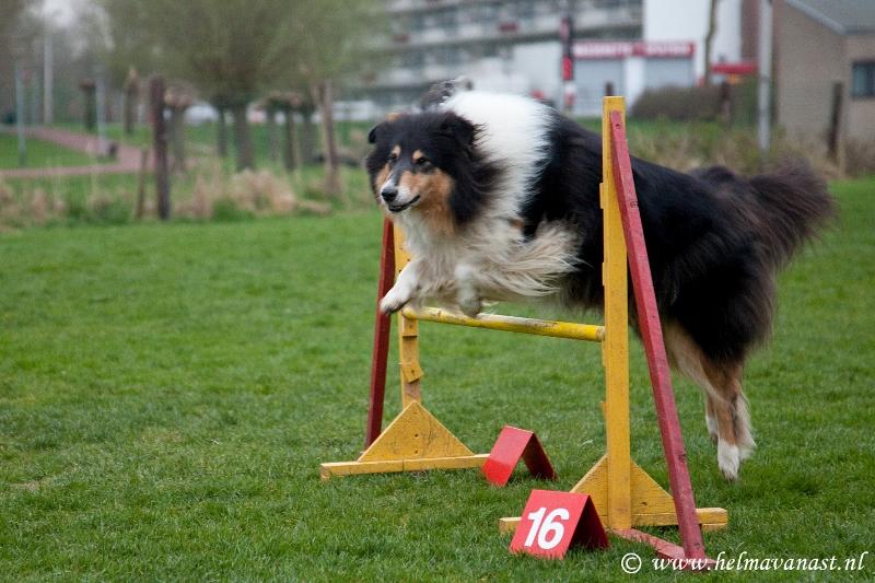hondenclub-027