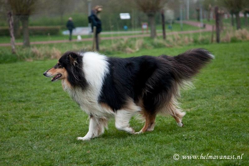 hondenclub-028