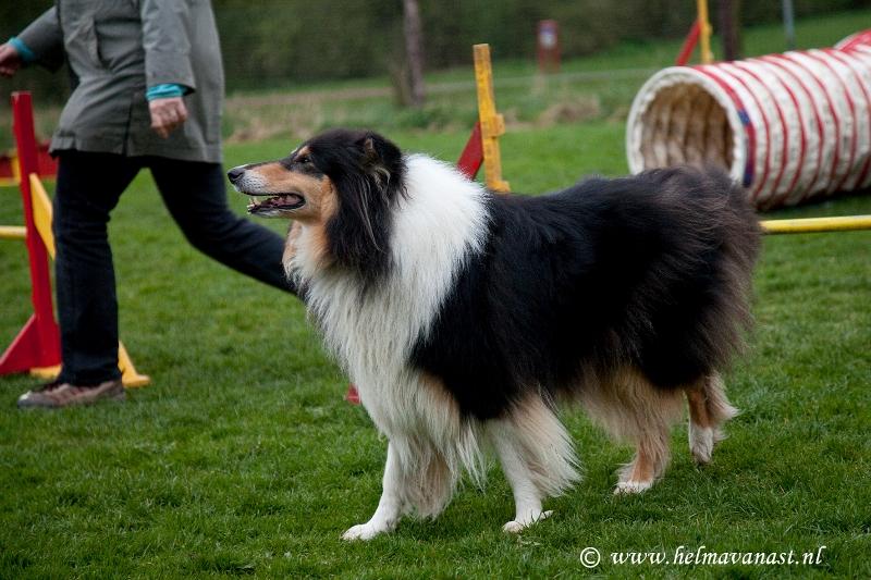 hondenclub-031