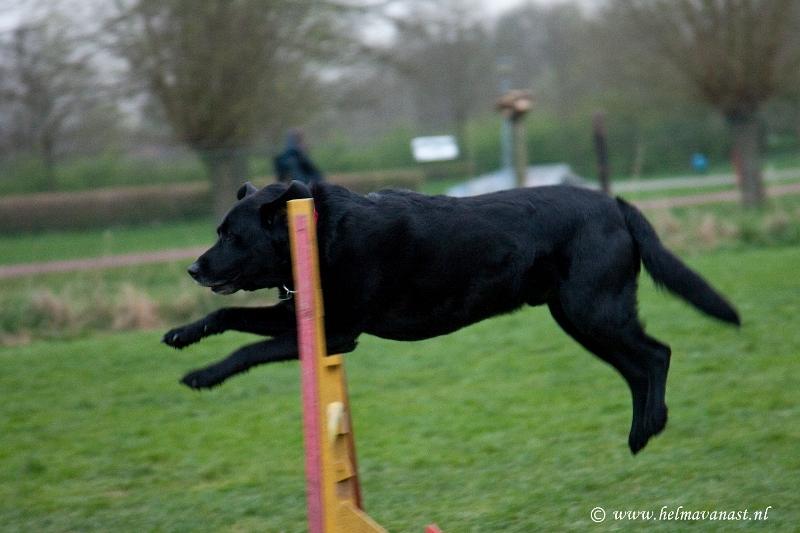 hondenclub-035