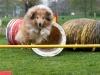 hondenclub-019